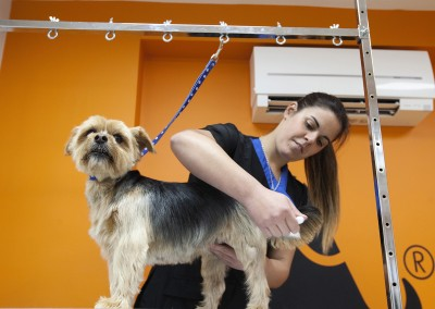 THE_DOG_GROOMER_PENKRIDGE_18