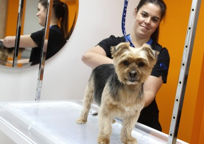 THE_DOG_GROOMER_PENKRIDGE_19